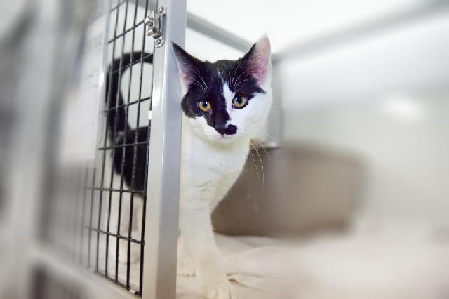 My name at SAFE Haven was Fanya and I was adopted!