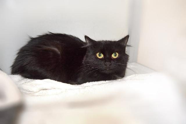 My name at SAFE Haven was Sigrid and I was adopted!