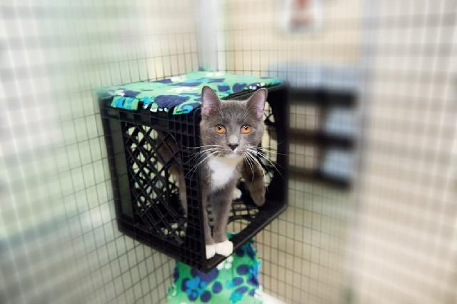 My name at SAFE Haven was Dinky and I was adopted!