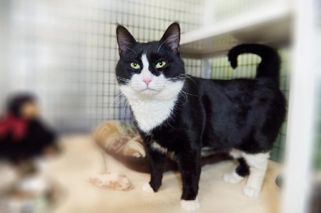 My name at SAFE Haven was Cliffie and I was adopted!