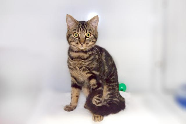 My name at SAFE Haven was Ferdinand and I was adopted!