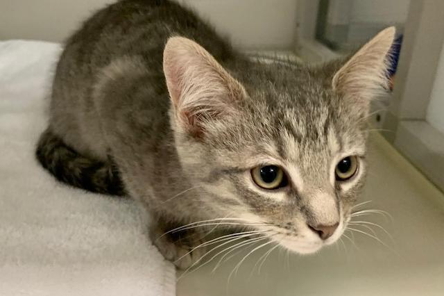 My name at SAFE Haven was Waldo and I was adopted!