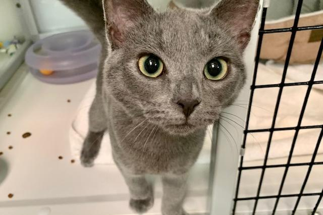My name at SAFE Haven was Ollie and I was adopted!