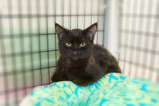 My name at SAFE Haven was Humperdink and I was adopted!