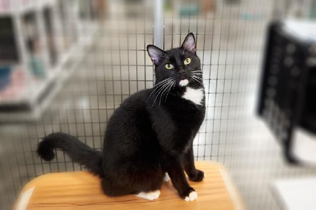 My name at SAFE Haven was Mr. Peeps and I was adopted!