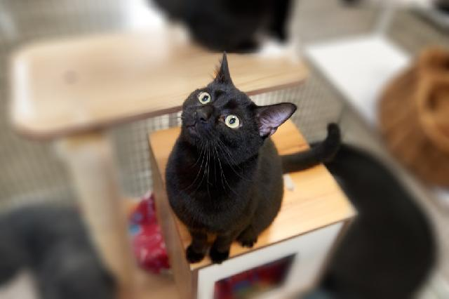 My name at SAFE Haven was Cecil and I was adopted!