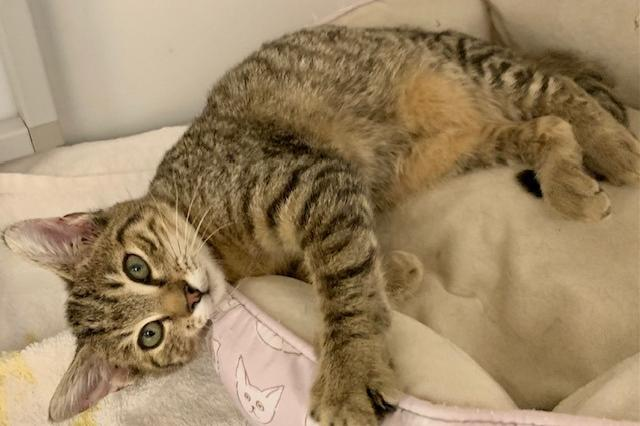 My name at SAFE Haven was Maeve and I was adopted!