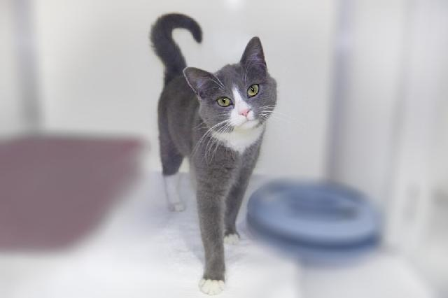 My name is Noelle and I am ready for adoption. Learn more about me!