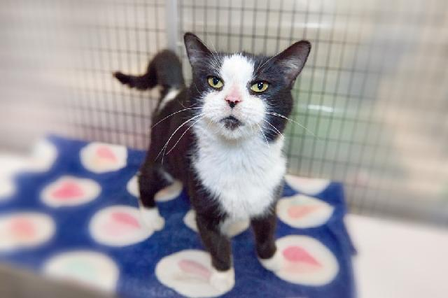 My name is Eve and I am ready for adoption. Learn more about me!