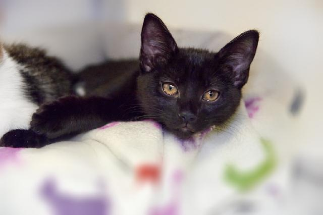 My name at SAFE Haven was Jingle and I was adopted!