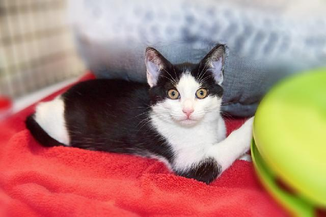 My name at SAFE Haven was Natalea and I was adopted!