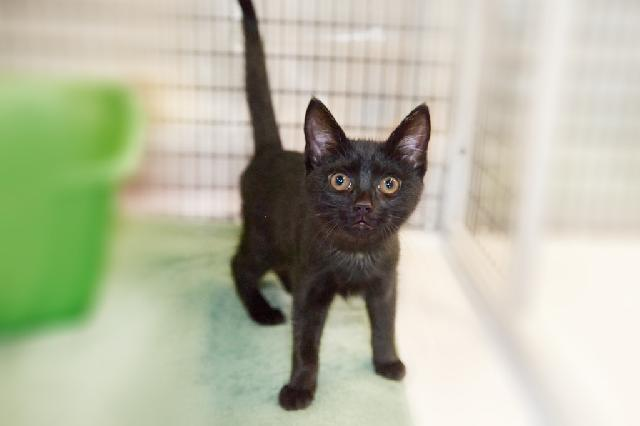 My name at SAFE Haven was Hollyberry and I was adopted!