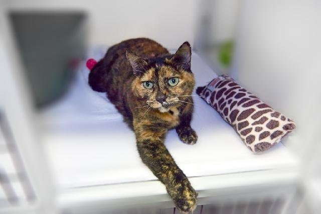 My name at SAFE Haven was Simone and I was adopted!
