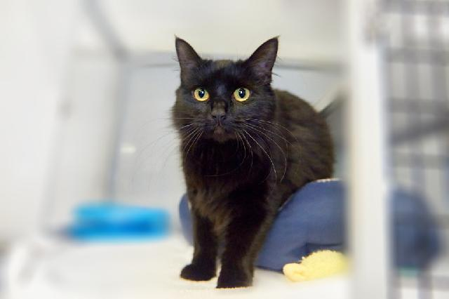 My name at SAFE Haven was Donia and I was adopted!