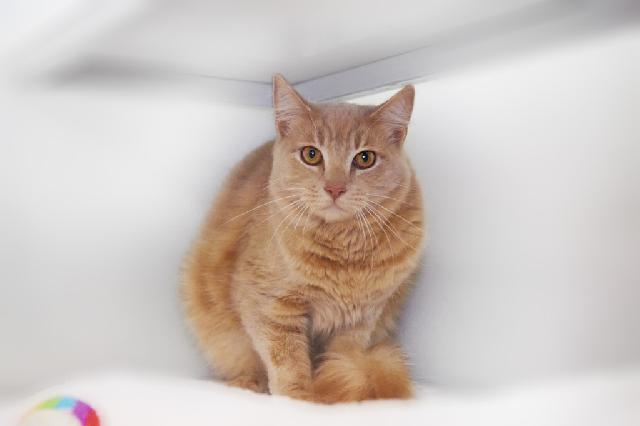 My name at SAFE Haven was Honeybear and I was adopted!