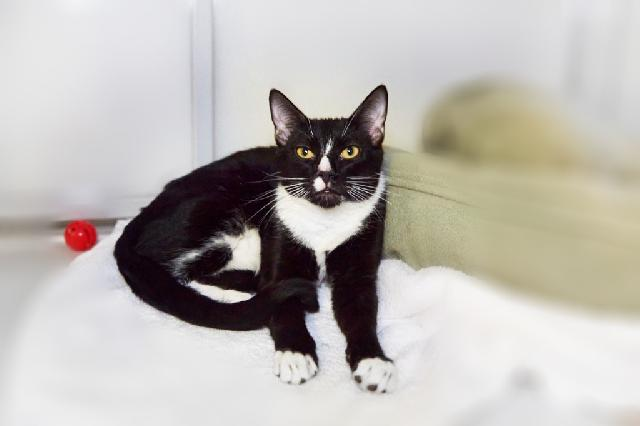 My name is Alfalfa and I am ready for adoption. Learn more about me!
