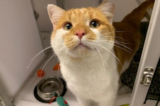 My name at SAFE Haven was Marty and I was adopted!