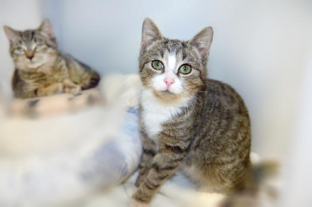My name at SAFE Haven was Allen and I was adopted!
