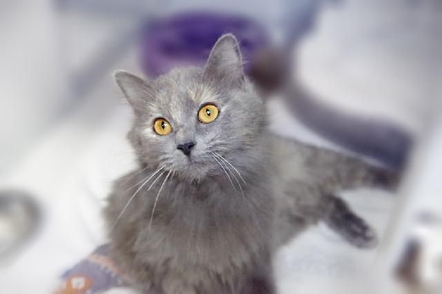 My name at SAFE Haven was Anastasia and I was adopted!