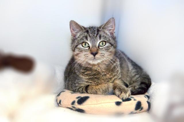 My name is Paddington and I am ready for adoption. Learn more about me!