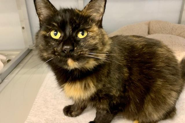 My name at SAFE Haven was Edna and I was adopted!