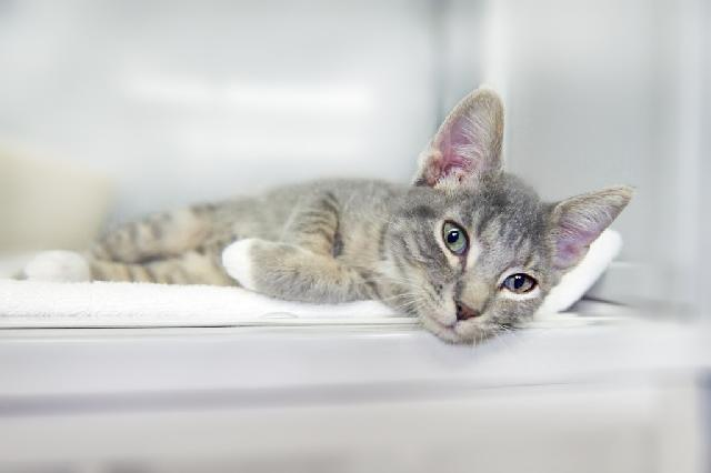 My name at SAFE Haven was Slider and I was adopted!