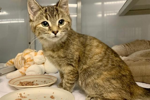 My name at SAFE Haven was Cedar and I was adopted!