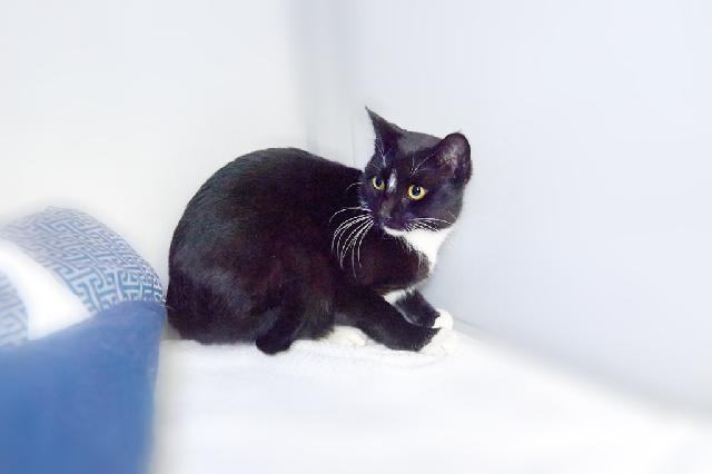My name at SAFE Haven was Lottie and I was adopted!