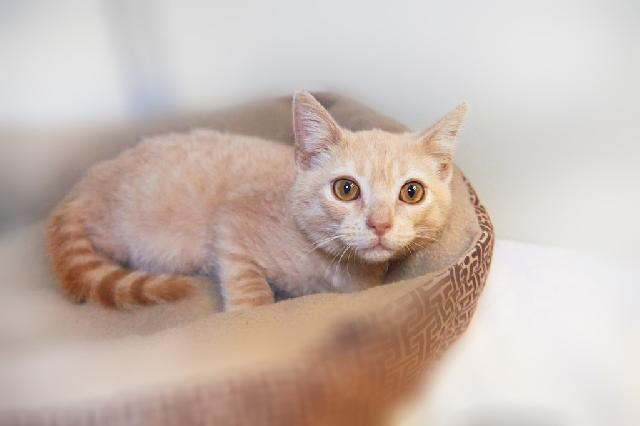 My name at SAFE Haven was Leif and I was adopted!