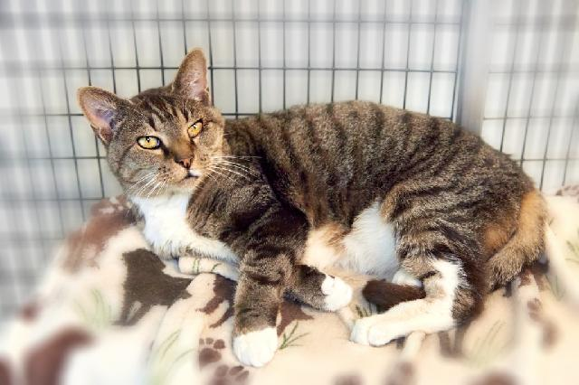 My name is Sushi and I am ready for adoption. Learn more about me!