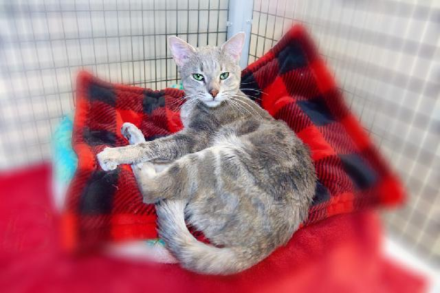 My name is Zack Morris and I am ready for adoption. Learn more about me!