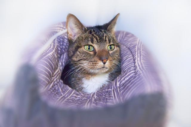 My name is Siberia and I am ready for adoption. Learn more about me!