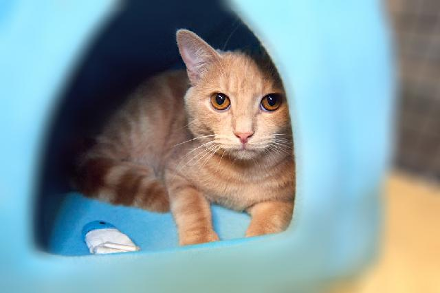 My name is Samwell and I am ready for adoption. Learn more about me!