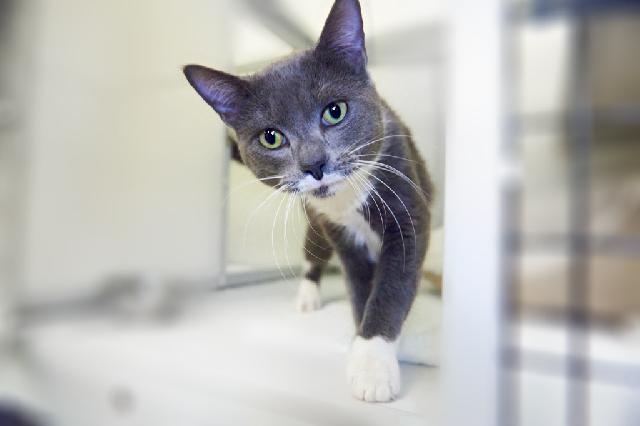 My name at SAFE Haven was Richard and I was adopted!