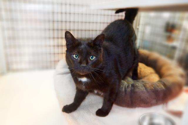 My name is Sarai and I am ready for adoption. Learn more about me!