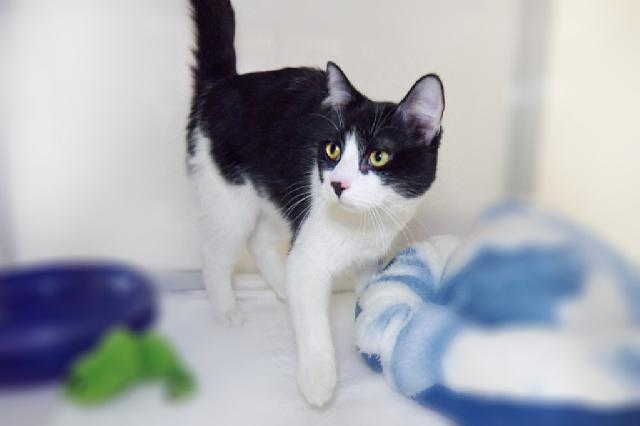 My name is Ned and I am ready for adoption. Learn more about me!