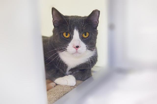 My name is Flintstone and I am ready for adoption. Learn more about me!