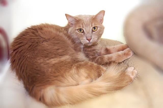 My name is Frederick and I am ready for adoption. Learn more about me!