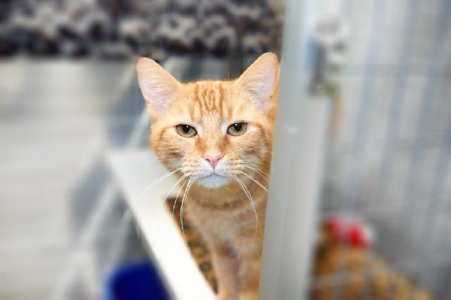 My name is Meowth and I am ready for adoption. Learn more about me!