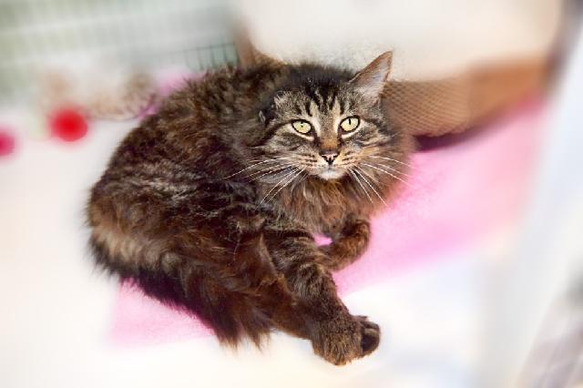 My name at SAFE Haven was Onyx and I was adopted!