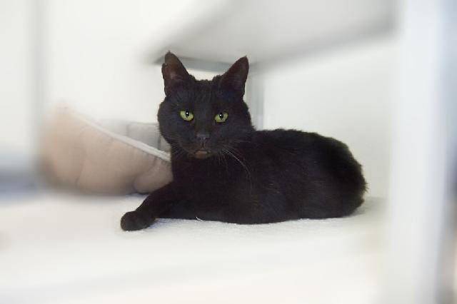 My name at SAFE Haven was Swallo and I was adopted!