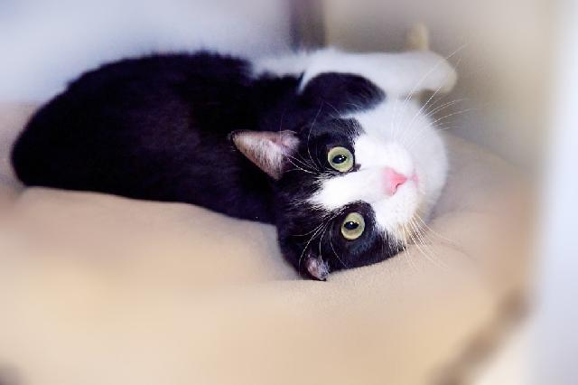 My name is Ivn and I am ready for adoption. Learn more about me!