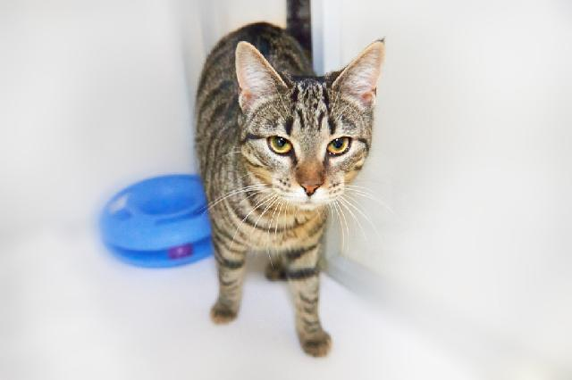 My name is Cleffa and I am ready for adoption. Learn more about me!