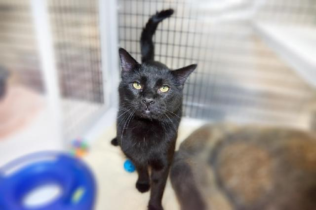 My name at SAFE Haven was Beedrill and I was adopted!