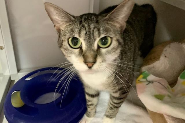 My name at SAFE Haven was Alice and I was adopted!