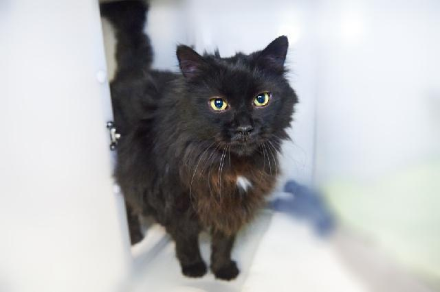 My name at SAFE Haven was Darth and I was adopted!