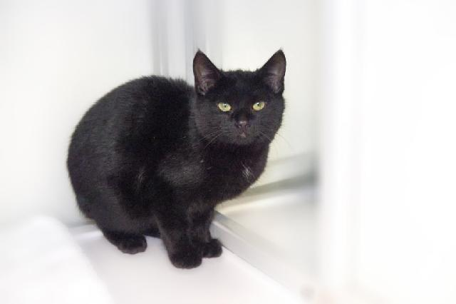 My name at SAFE Haven was Irwin and I was adopted!