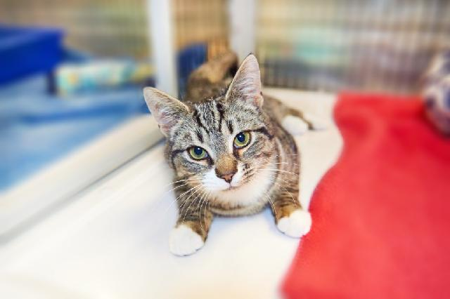 My name at SAFE Haven was Fajita and I was adopted!