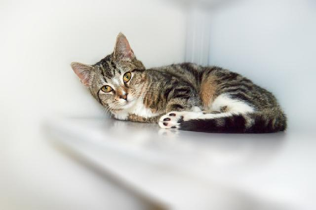 My name at SAFE Haven was Aden and I was adopted!