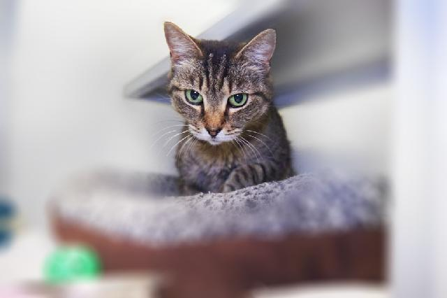 My name at SAFE Haven was Brita and I was adopted!